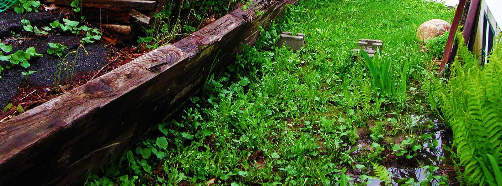 Vous songez à remplacer certains éléments de votre aménagement paysagé...